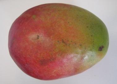 what a mango looks like